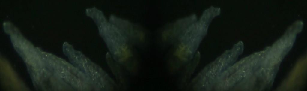 piscis-ludicrous-_-tranfix-gaze-lygophilia-05-3600x1080