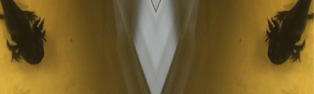 piscis-ludicrous-_-tranfix-gaze-lygophilia-10-3600x108001